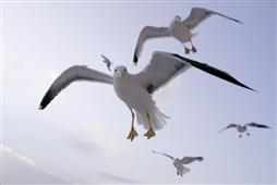Le Marais aux oiseaux � Dolus